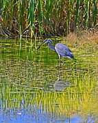 Edward Kovalsky - Blue Heron Eats Lunch3