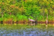 Spiritual Artwork Prints - Blue Heron-In the swamp-20 Print by Robert Pearson