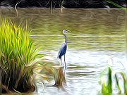 Swamp Digital Art - Blue Heron in the Wild by Bill Cannon