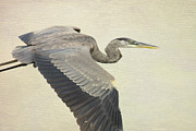 Waterfowl Mixed Media Framed Prints - Blue Heron On Canvas Framed Print by Deborah Benoit