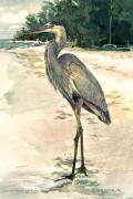 Water Bird Posters - Blue Heron on Shell Beach Poster by Shawn McLoughlin