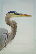 Waterfowl Mixed Media Framed Prints - Blue Heron On Soft Texture Framed Print by Deborah Benoit