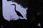On Paper Photo Originals - Blue Heron by Patricia Bolgosano
