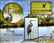 Flying Pyrography Prints - Blue Heron Pose Print by Shirley Tinkham