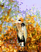 Colorful Photography Posters - Blue Heron Standing Poster by Nick Gustafson