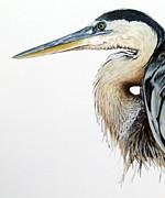 Blue Heron Study Print by Greg Halom