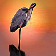 Robert Wicker - Blue Heron Sunset