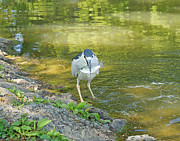 J Jaiam - Blue Heron With Fish One