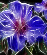 Luminous Digital Art - Blue Hibiscus Fractal Panel 3 by Peter Piatt
