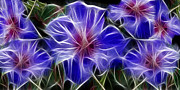 Soft Prints - Blue Hibiscus Fractal Print by Peter Piatt