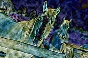 Pet Digital Art Originals - Blue Horses by Steve Shockley