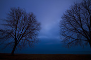Winter Trees Posters - Blue Hour Trees Silhouette Poster by Sven Brogren