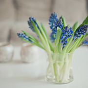 Y120817 Art - Blue Hyacinths In A Glass Vase by Cindy Prins