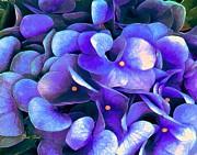 Dale   Ford - Blue Hydrangeas