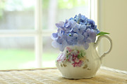 Old Pitcher Posters - Blue Hydrangeas In Antique Floral Pitcher Poster by Judy Davidson