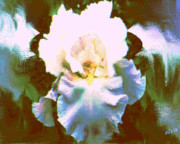 Posters On Digital Art - Blue Iris by Elva Kimble