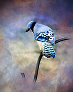 Bird Prints Posters - Blue Jay Blue Jay Sing Me A Song Poster by Kathy Jennings