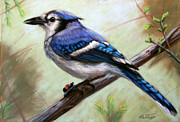 Nature Pastels - Blue Jay by Deb LaFogg-Docherty