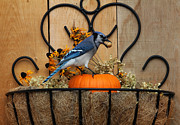 Flower Basket Framed Prints - Blue Jay in Flower Basket Framed Print by Marjorie Imbeau