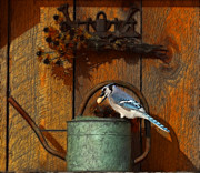 Watering Can Mixed Media - Blue Jay On Watering Can by Marjorie Imbeau