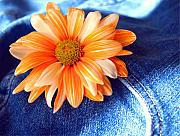 Blue Jeans Framed Prints - Blue Jeans and Daisies Framed Print by Wendy Mogul