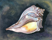 Sea Shell Painting Prints - Blue-knobbed Whelk Print by Barbara Jewell