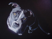 Pit Bull Posters - Blue Light Poster by Stacey Jasmin