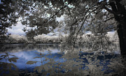 Infrared Photos - Blue love by George Saad