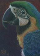 R Alderman - Blue MaCaw - My version