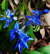 Flowers - Blue Manipulation by David Lane