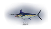 Blue Drawings Framed Prints - Blue Marlin Framed Print by Ralph Martens