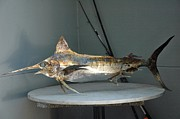 Marine Life Sculptures - Blue Marlin by Vince Anthony