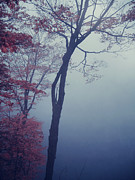 Autumn Photograph Posters - Blue Mist Poster by Aimelle