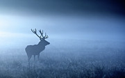 Deer Antler Prints - Blue Mist Print by MarkBridger