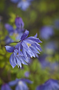 Flower Photos - Blue Montage by Mike Reid