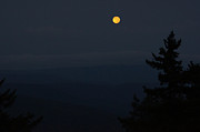 Fir Trees Photo Originals - Blue Moon over Snowshoe by Doug Hubbard