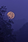 Blue Moon Photos - Blue Moon Rising by Rob Travis