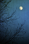 Bare Tree Posters - Blue Moon Poster by Susan McDougall Photography