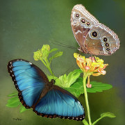 Butterfly Digital Art - Blue Morpho  butterflies by Thanh Thuy Nguyen