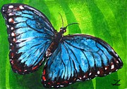 Most Popular Paintings - Blue Morpho Butterfly by Zaira Dzhaubaeva