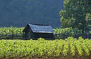 Scenic Barn Posters - Blue Mountain Farm Poster by David Lee Thompson