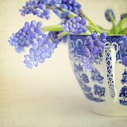 Textured Floral Framed Prints - Blue Muscari flowers in blue and white china cup Framed Print by Lyn Randle