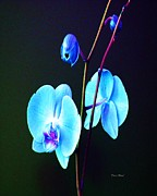 Orchids Digital Art - Blue Orchids by Doris Wood