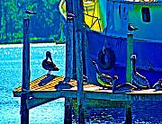 Water Digital Art Originals - Blue Pelicans by Michael Thomas