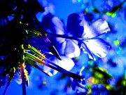 Catherine Natalia  Roche - Blue Plumbago Flowers