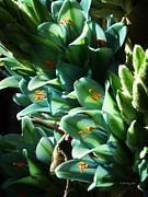 Xueling Zou - Blue Puya