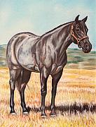 Standing Pastels Framed Prints - Blue Quarter Horse Framed Print by Lucy Deane