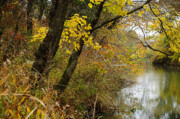 Autumn Trees Photo Prints - Blue river in Autumn Print by Iris Greenwell