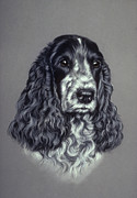 Black Curly Hair Pastels Prints - Blue Roan Cocker Spaniel Print by Patricia Ivy