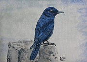 Ketki Fadnis - Blue Rock Thrush